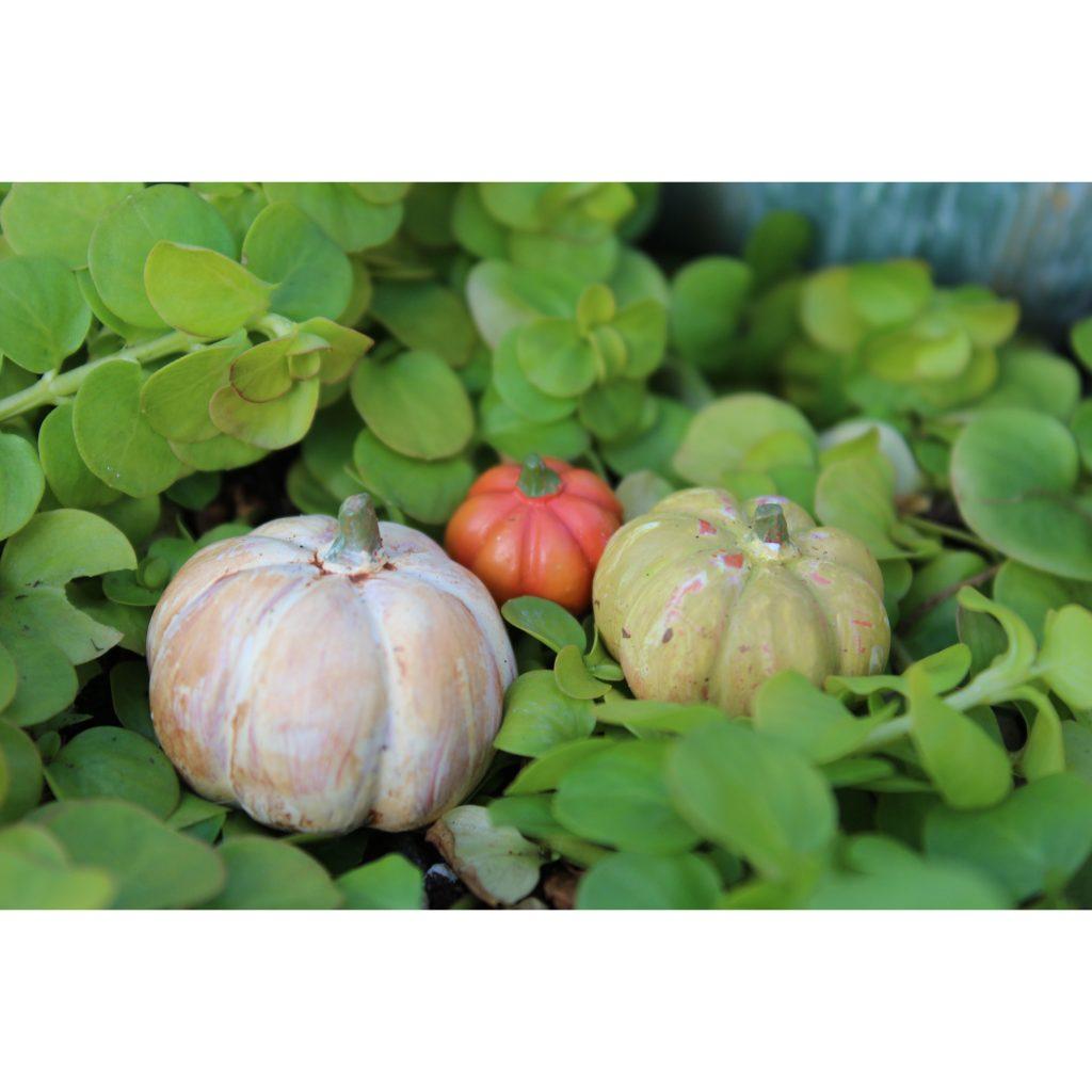 Pumpkin-Patch-Set-3-1-1024x1024